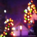 01_Weihnachtsbäume_MiWuLa