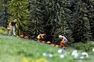 Auch in den wunderländischen Wäldern und Gehölzen wird um diese Jahreszeit gesammelt und gepflückt, was da Zeug hält.