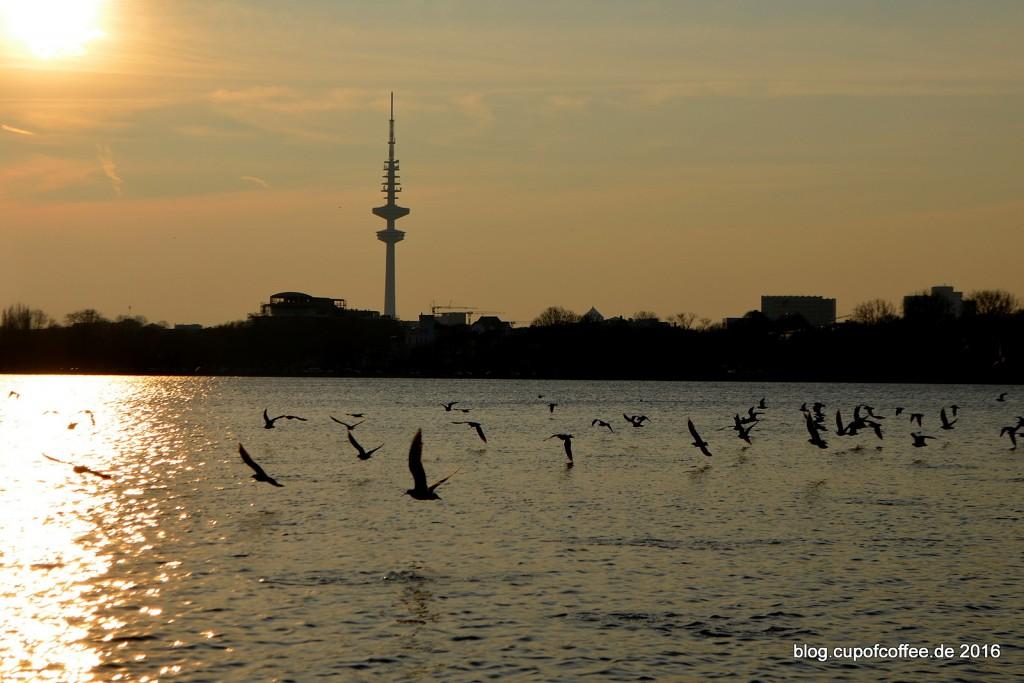 Alster_Hamburg_Möwen
